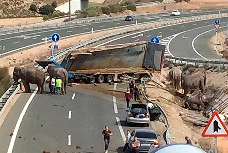 Un elefante muere en un accidente de tr fico en albacete - Jefatura de trafico de albacete ...
