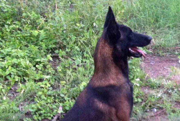 Muere un bebé de 20 días atacado por un perro en Tenerife