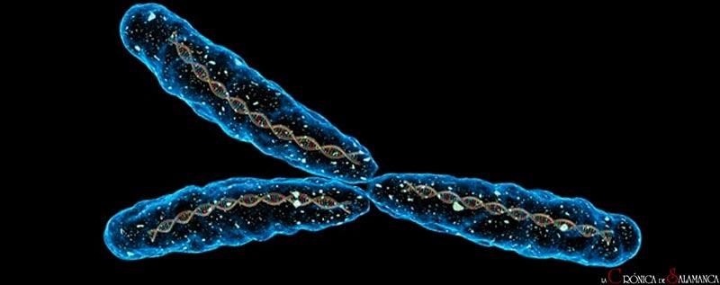 cromosomas vida artificial