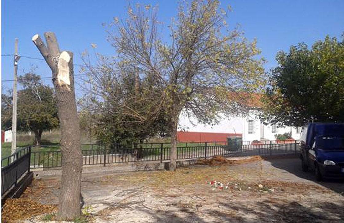 El árbol quedó en este estado.
