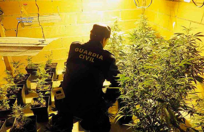 PLANTACION marihuana
