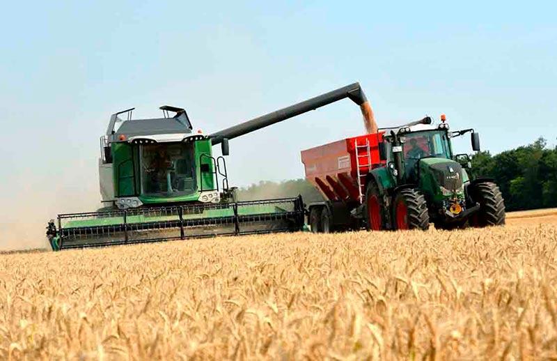 La cosecha de trigo en una plantación.
