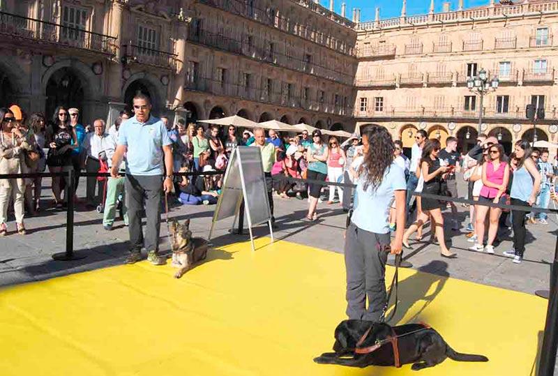 Un momento de la exhibición de los perros guía de la Once.