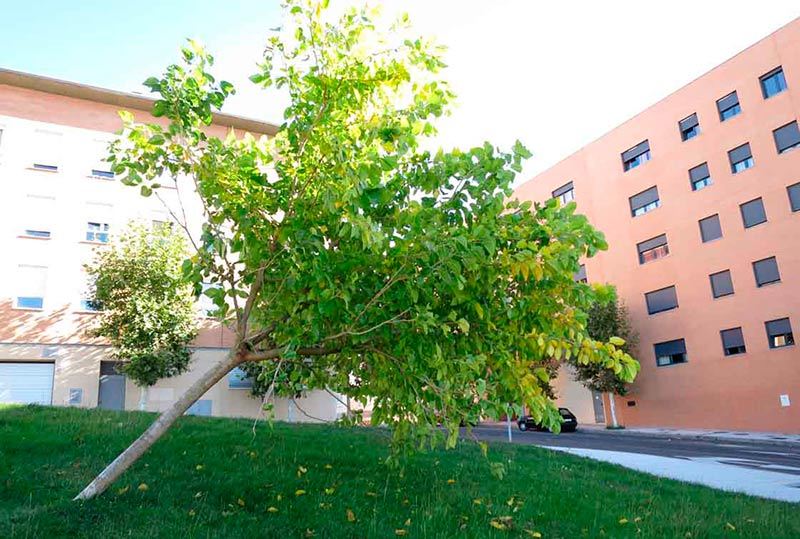 El árbol caído en la calle Escribanos.