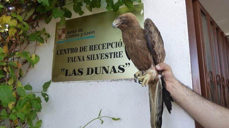 Los casi 180 animales silvestres recuperados fueron trasladados hasta el Centro de Recuperación de Fauna Silvestre de Las Dunas. Foto. Facebook CRFS Las Dunas.