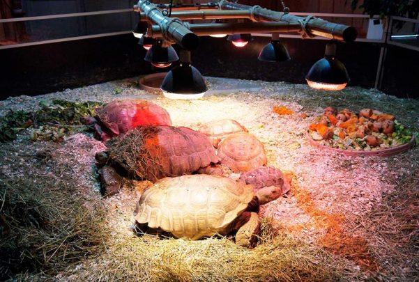 cc el tormes reptiles La fauna reptiliana 10