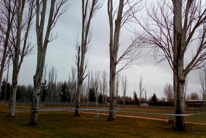viento temporal aldehuela acordonada chopos 2