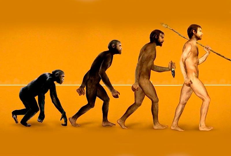 evolucion 2
