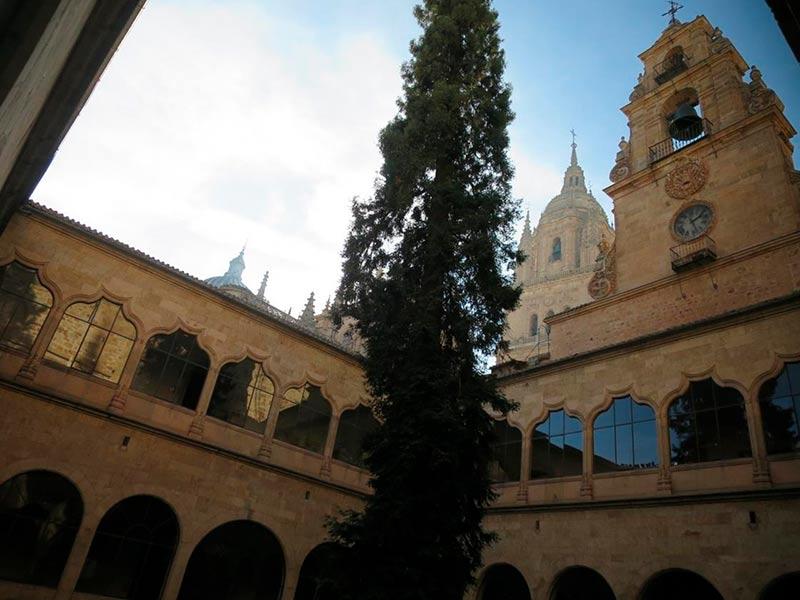 usal universidad patio edificio historico arbol