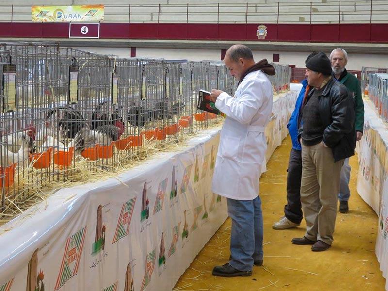 alba campeonato avicultura y colombicultura palomas gallinas