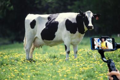 El cuento de la lechera en versión moderna.