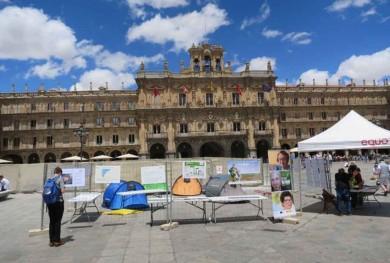 Refugiados, acampada Plaza mayor.