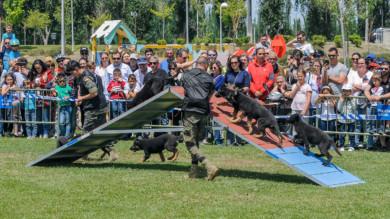 Perros socializados, adiestrados por el Ejército en Salamanca