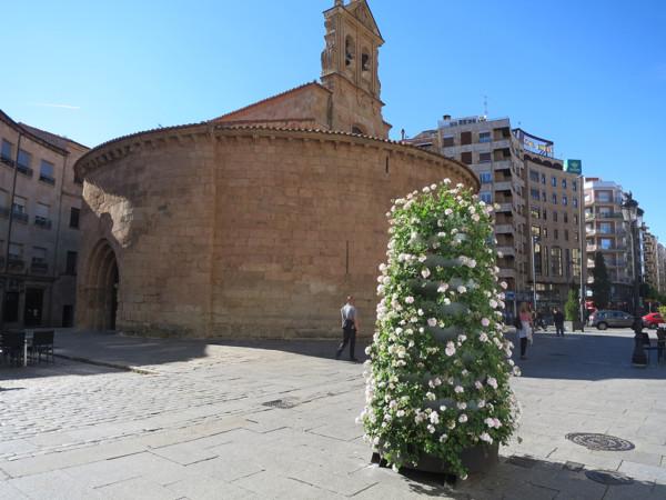 jardineras, jardineras con flores, calle Zamora