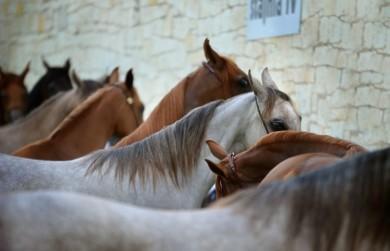 caballos pixabay