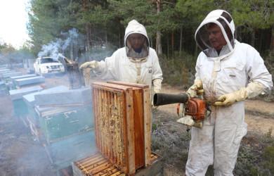 Brágimo / ICAL Los apicultores palentinos Felipe y Mario García recolectan la miel al final del verano en las colmenas que tienen instaladas en el monte de Villota del Páramo (Palencia)