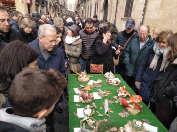 Exposición de setas en la plaza de la Libertad organizada por la Sociedad Micológica Salmantina Lazarillo.
