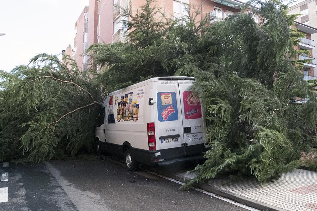 Jesús Formigo / ICAL Un arbol de grandes dimensiones cae sobre varios vehículos en la calle del Corregidor Caballero Llanes de Salamanca
