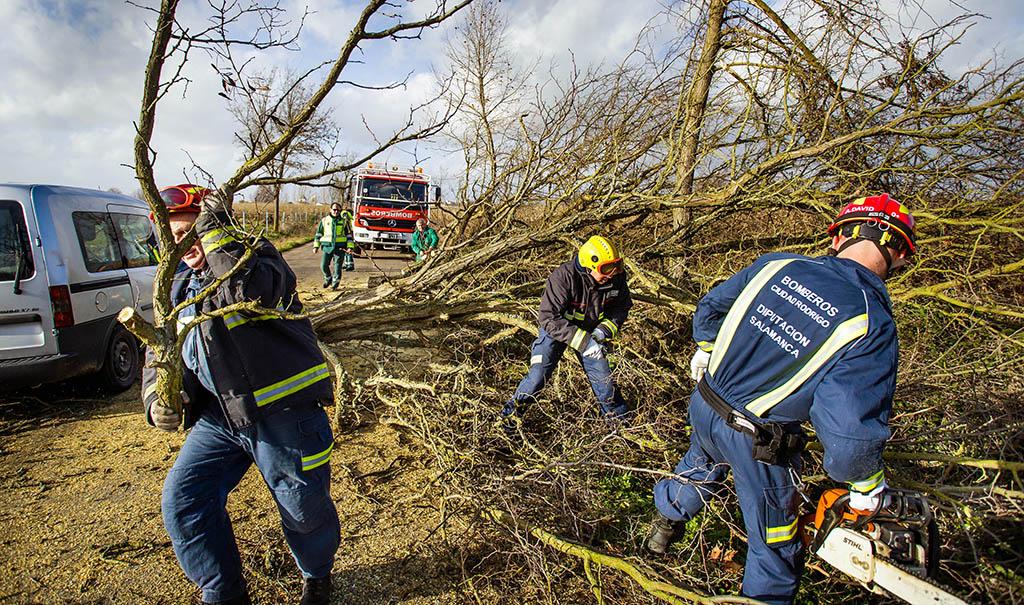 José Vicente / ICAL Varios árboles han caído en la carretera que une Ciudad Rodrigo con Agueda(Salamanca).