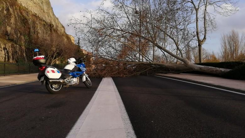 La Policía Local corta Rector Esperabé al tráfico rodado por la caída de uno de los árboles del paseo.