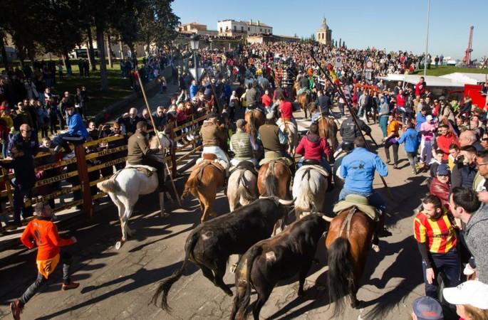 carnaval ciudad rodrigo ical vicente (4)