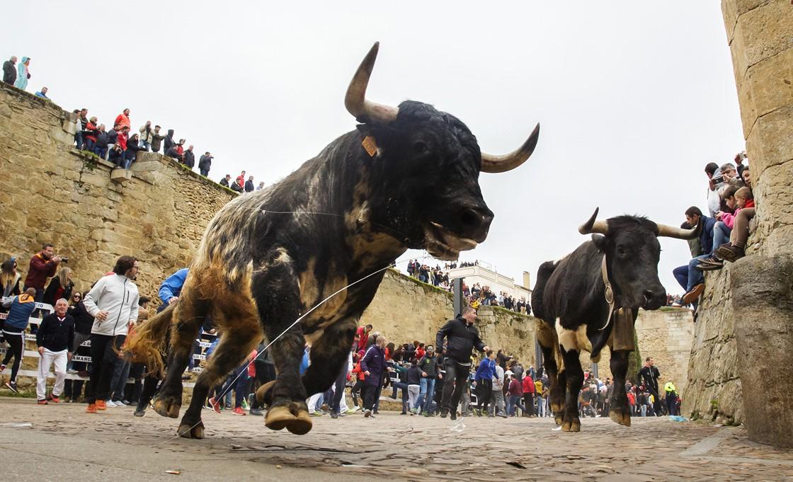 herido grave carnaval ciudad rodrigo (2)