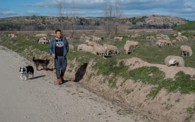 Juan Rodríguez, pastor de 25 años, vive en Pelabravo y tiene una explotación de más de 700 ovejas.