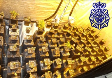 policia plantacion marihuana piso desahucio