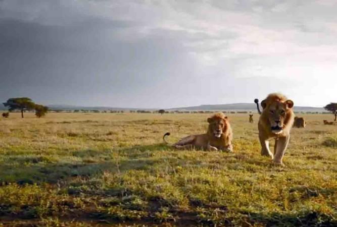 serengueti leones