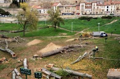 tala chopos puente romano (7)