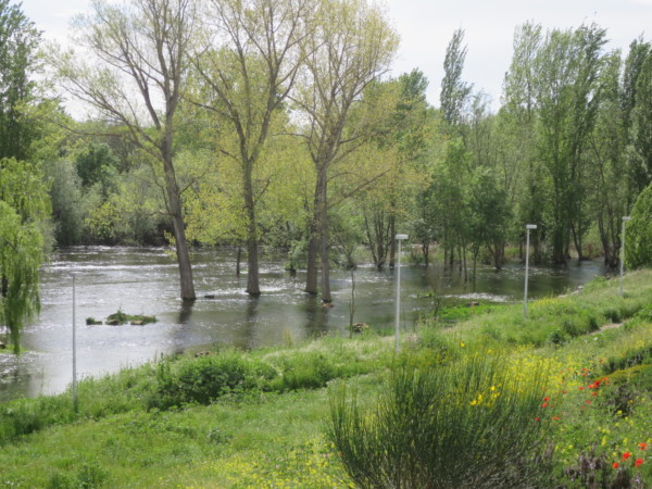 rio tormes desbordado lunes aguas coronavirus puente romano
