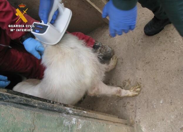 perro rehala linares veterinario