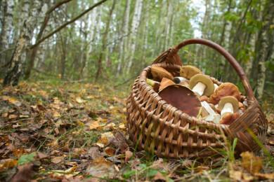 Una cesta con setas silvestres.