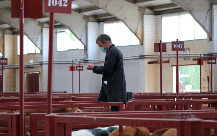 El mercado de ganado de Salamanca regresa a la nueva normalidad con 760 animales