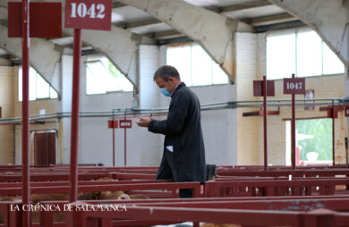 La Lonja de Salamanca sigue su curso adaptada a la nueva normalidad