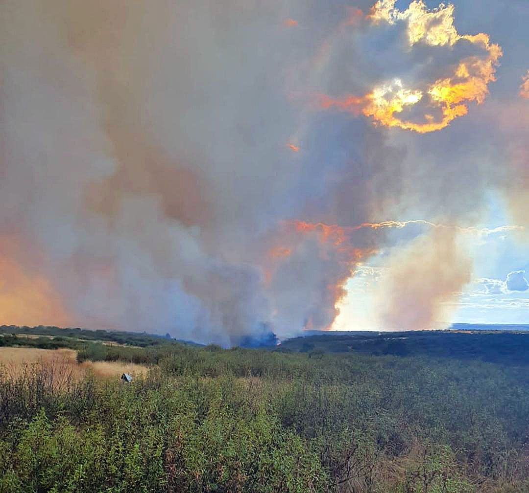ICAL. Incendio forestal en Gallegos del Río (Zamora)