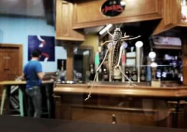 langostas gigantes cristalera bar calle la reja