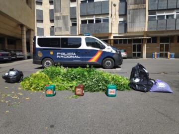 La Policía Nacional detiene a un hombre que cultivaba marihuana en su casa de Salamanca.