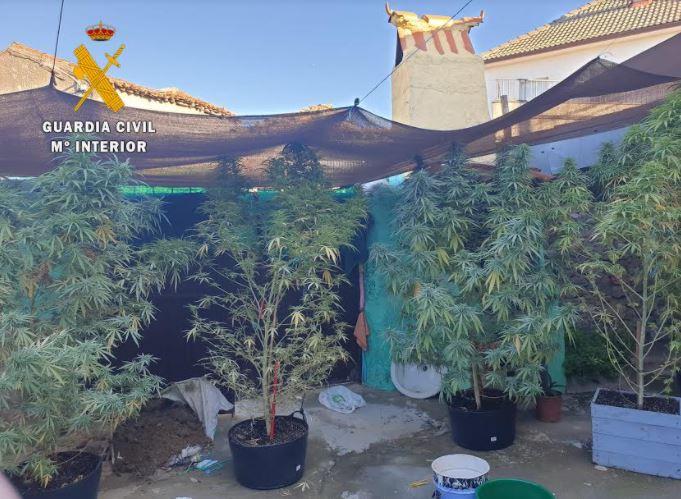 marihuana plantacion ciudad rodrigo 2