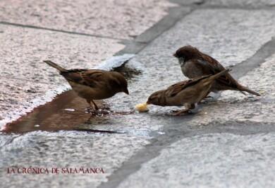 Domingo de otoño Salamanca