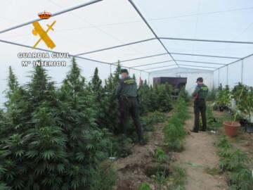 La Guardia Civil detiene a un hombre como cultivador de marihuana en Aldearodrigo