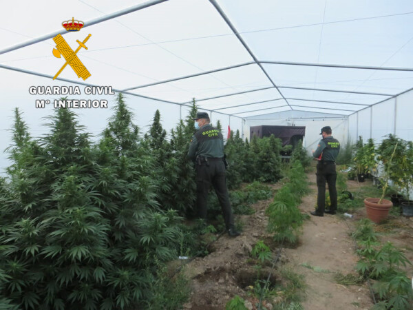La Guardia Civil detiene a un hombre como cultivador de marihuana en Aldearrodrigo