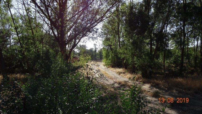 ribera del Tormes en Tejares, antes de las obras de las huertas
