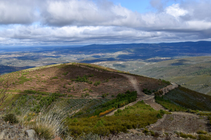JCyL / ICAL . Zona de labores de reforestación del proyecto 'El Bosque de Red Eléctrica' en la Sierra de Gata (Salamanca)
