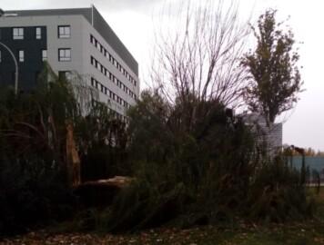 viento arbol tronchado campus hospital 2