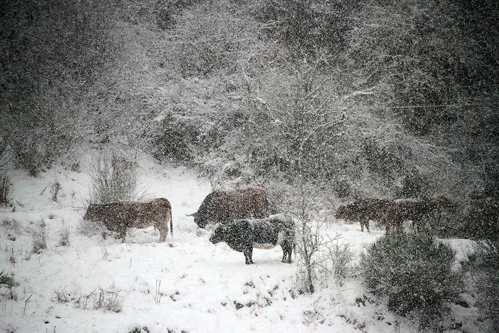 ICAL. La nieve cubre la comarca leonesa de Los Argüellos.