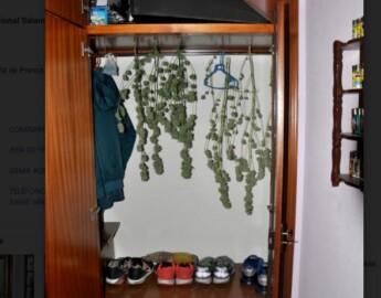 bejar marihuana armario
