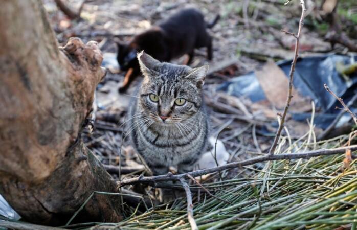 colonia controlada gatos leon ical