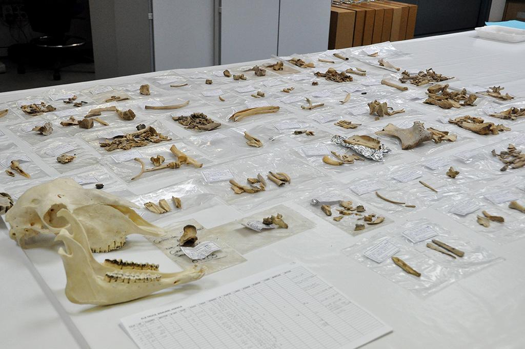ICAL . Laboratorio de Arqueobiología del Instituto de Historia el CSIC (Madrid) donde se analizan las muestras de ovinos del presente estudio