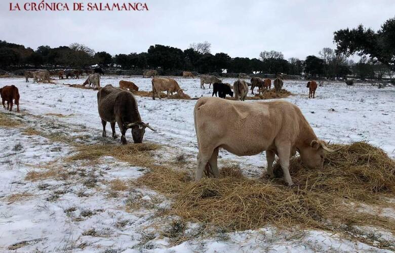 Nieve Campo Salamanca